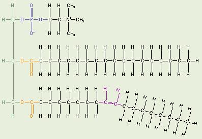 Fat Lipid 106