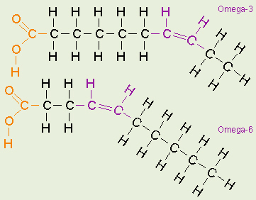 LipidsOmega 3 Fatty Acid Structure